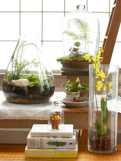Wiwarium Czyli Ogródek W Szkle Kody Wnętrza