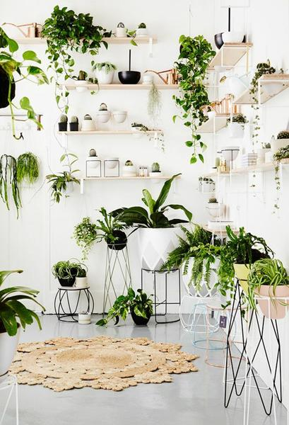 TREND: HOME JUNGLE